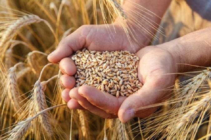 Gıda ve tarım ithalatında buğday, ihracatta fındık öne çıkıyor!