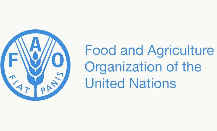 FAO Stratejik Çerçeve çalışmaları
